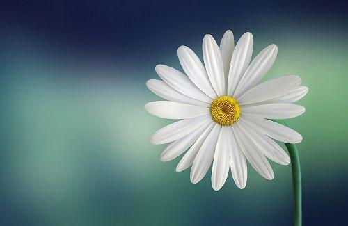 Sử dụng từ 'hoa' đúng cách trong Tiếng Anh